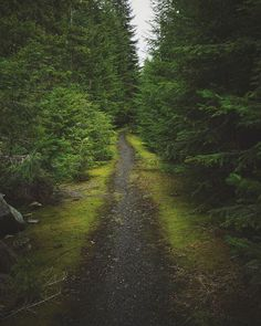Trails leading nowhere