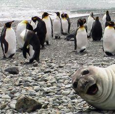 #photobomb #sealofapproval #laughedoutloud