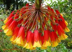 Kwiaty tak piękne, że otwiera się szeroko oczy i usta ze zdziwienia!