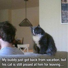 Hell hath no fury like a kitty scorned ....
