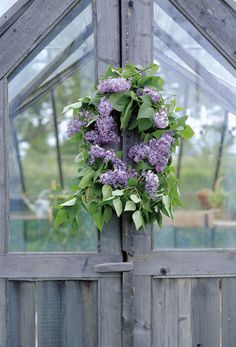 Come on in. Lilacs!