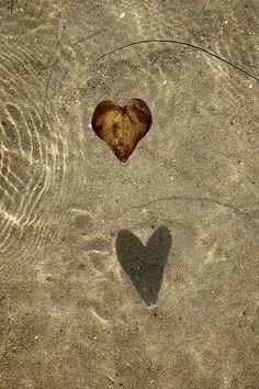 Leaf images underwater- via We Heart It