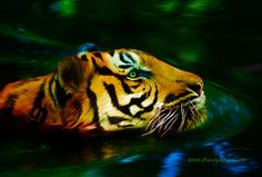 A digital painting created by Tracey Everington of Tracey Lee Art Designs. Showing a tiger enjoying a refreshing swim. Titled Afternoon Swim.