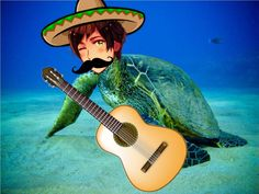"""HOLA, MI AMIGOS~ I AM THE GREAT TURTLE, SPAIN~ LET ME PLAY YOU THE SONG OF MY PEOPLE!"""