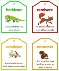 Nyla's Crafty Teaching: Food Chain and Food Web Vocabulary Words - Literacy Station for Science