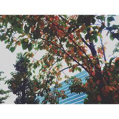 【sunnyspot.o_sol】さんのInstagramをピンしています。 《*染まる* ・ ・ 秋色に染まってきた🍂 紅葉の季節の お散歩がたのしみ👣👣 ・ ・ ・ 心にひだまりを⋆*॰¨̮⋆。˚ ・ #桜#紅葉#秋色 #autumn#秋の気配》