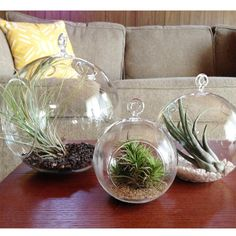 As seen in Better Homes & Gardens! Hanging terrariums can be both appealing and eco-friendly. Most have flat bottoms so you can choose to hang it or place