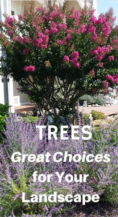 Garden Designs Ideas 2018 : Help is here! Discover the best landscape trees to use. Evergreen trees, flowering and shade trees. Garden Shrubs, Garden Trees, Lawn And Garden, Garden Oasis, Trees And Shrubs, Flowering Trees, Evergreen Trees, Blooming Trees, Driveway Landscaping