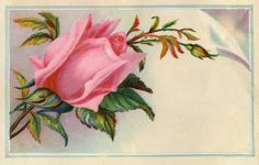 victorian cards | Victorian Graphic - Rose Calling Card - The Graphics Fairy