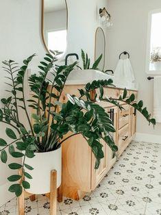 ZZ Plant Complete Care Guide - That Planty Life Planty Badezimmer 🌿 Plante Zz, Zz Plant, Decoration Plante, House Plants Decor, Plants In The House, Indoor Plant Decor, Best Indoor Plants, Plant Aesthetic, Houseplants