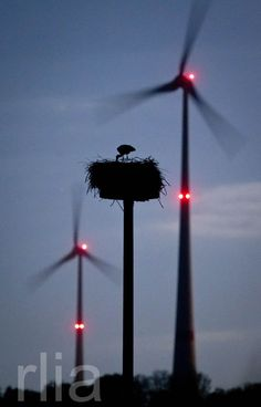 LE NID / THE NEST ©Frank Rumpenhorst/EPA/MAXPPP - A stork stands in his nest amid turning wind turbines near Schoeneck, Germany, 15 April 2014
