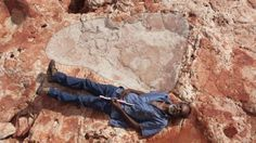Believed to be the largest dinosaur footprint yet found, this sauropod print is over 5 feet long.