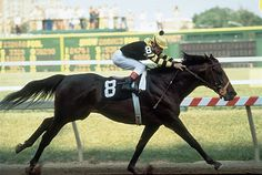 Seattle Slew in 1977 was undefeated through his Triple crown campaign. He won all 3 races easily.By the end of his career, he won 14 out of 17 races, and earned 1,208,726 dollars.