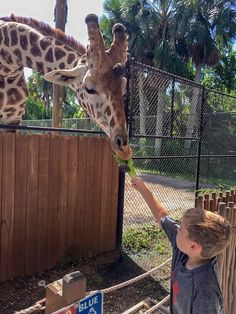 Are you planning a vacation to Naples, Florida? Here you can find insider tips and 16 Top Things to See, Eat, and Do on your Naples Vacation. Naples Zoo, Naples Pier, Naples Beach, Naples Florida, Tampa Florida, Old Florida, Florida Vacation, Florida Travel, Florida Beaches