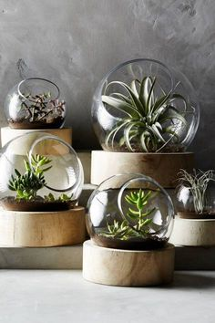 Planetarium Terrarium #anthrofave #anthropologie