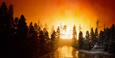 'California Forest Fire'