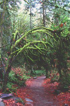 getlostpal:    Lynn Canyon, BC