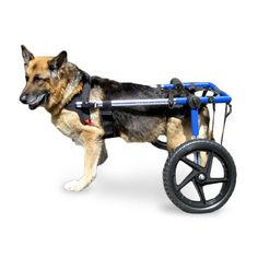 Walkin' Wheels Dog Wheelchair XLarge Blue - Commercial Bargains Inc. - 1