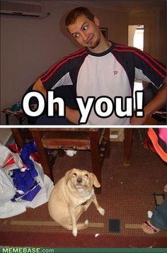 dog's face!!! lol!!!