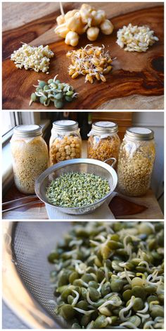 How to sprout grains and beans #growing #kitchen #cooking