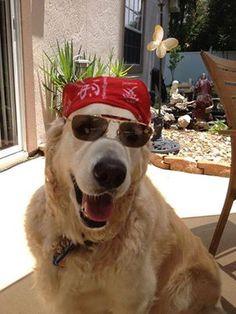 Rocker Dog Dude!
