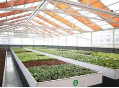 Polysolar Ltd. have developed a translucent photovoltaic glass panel, which is ideal for greenhouse
