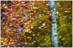 """Reflections,""  photograph by Robert Berdan"