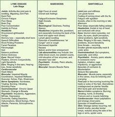 Lyme, Babesiosis & Bartonella symptoms