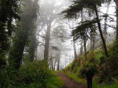 Urban Hiking: 6 Gorgeous Nature Walks in San Francisco