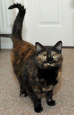 4 histoires bouleversantes qui prouvent que les chats sont des êtres extraordinaires ! - Héros - Wamiz