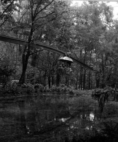 Florida Memory - View of the monorail car at Rainbow Springs - Dunnellon, Florida