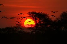 Sibuya, one of South Africa's most unique Safari and birding destinations, has more navigable river than any other game reserve in South Africa. Tourism Marketing, Game Reserve, Wilderness, South Africa, Safari, Exotic, Wildlife, Big 5, Sunsets