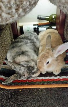 Bunnies have a cuddle and a smooch - March 24, 2017