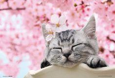 Sleeping in the Sakura