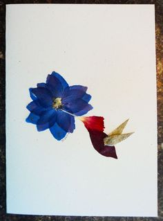 Hummingbird Pressed Flower Card by seedstoscenes on Etsy, $6.00