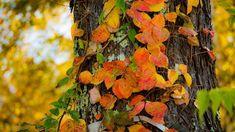 #autumn #autumncolors #autumnleaves #fallenleaves #leaveonlyleaves #autumngram #nature  #紅葉 #落葉