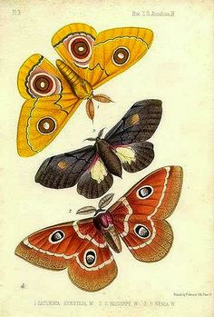 Tropical butterflies/moths, Zoological Society of London