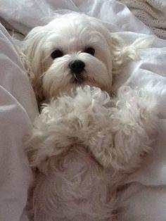 My sweet doggie, Violet!