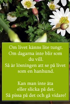 Lisbet Olofsson, the one and only Herbs, Humor, Quotes, Alphabet, Witch, Facts, Facebook, Funny, Design