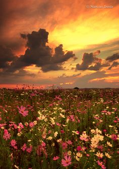 Cosmos Sunset by Marcus Jooste on 500px