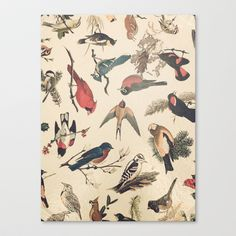 Vintage Songbirds Stretched Canvas by Selah Studio - $85.00