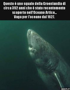 Animals And Pets, Baby Animals, Funny Animals, Cute Animals, Sea World, Weird Facts, Amazing Nature, Beautiful Creatures, Bellisima