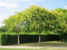 De vijf mooiste kleine bomen en heesters voor in de tuin Can Run, Run Around, Grasses, Park, Flowers, Plants, Gardening, Outdoor, Gardens