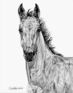 cuadros-de-caballos-a-lapiz