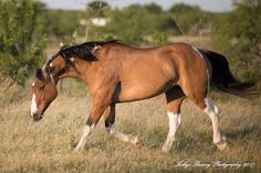 stunning paint horse