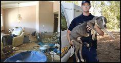 40 pit-bulls ont été sauvés d'une maison abandonnée et ont reçu une seconde…
