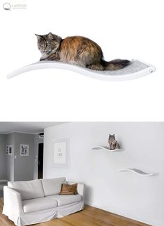 Cat Perch, Shelf Wave, Floating Cat Shelves, Pet Design, Cat Shelves, Cat  Furniture, Curve Bed