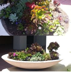 Love this wide planter built into a cement wall and packed with succulents...makes a great entry detail!