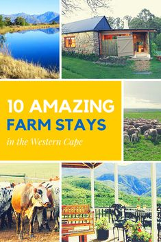 If you just want to get away from it all, South Africa offers a variety of relaxing farm stays. Here we give you 10 fantastic options in the Western Cape. Farm Stay, Holidays With Kids, Cape Town, South Africa, Westerns, Travel Inspiration, Relax, Camping, Travelling