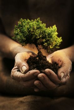 Reminds me how much i love bonsai trees! I will own a chinese bonsai tree in this lifetime! Mother Earth, Mother Nature, Leonardo Boff, No Photoshop, Photoshop Images, Do Your Best, Favim, Earth Day, Planet Earth